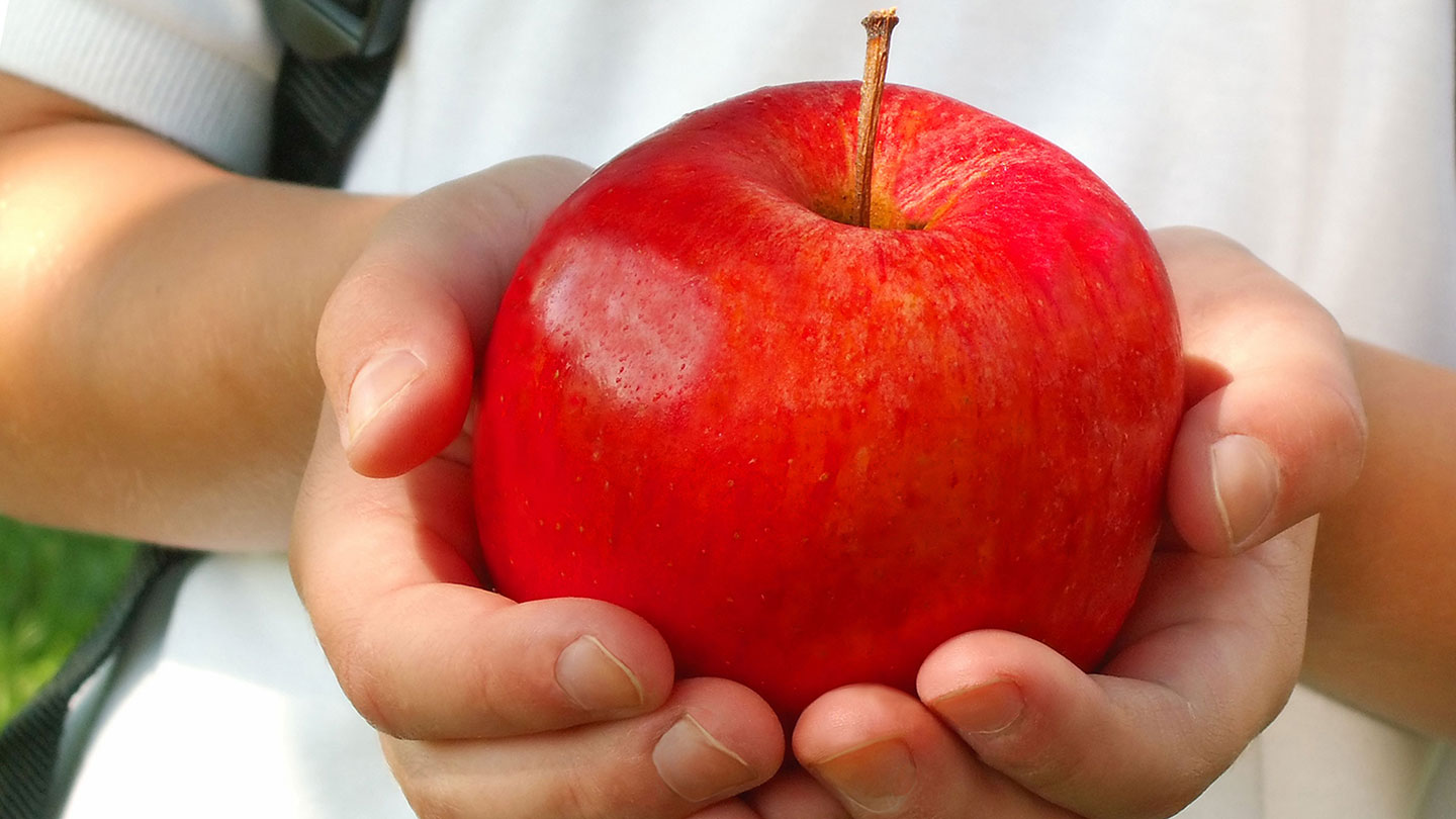 Zoomed in photo of child holding apple in hands.