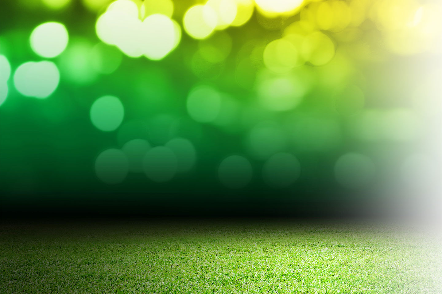 Blurred lights and grass background