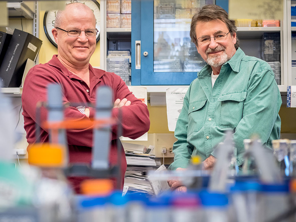 David Rotella (left) and John Siekierka are working with an NIH grant to search for new antimalarial treatments.