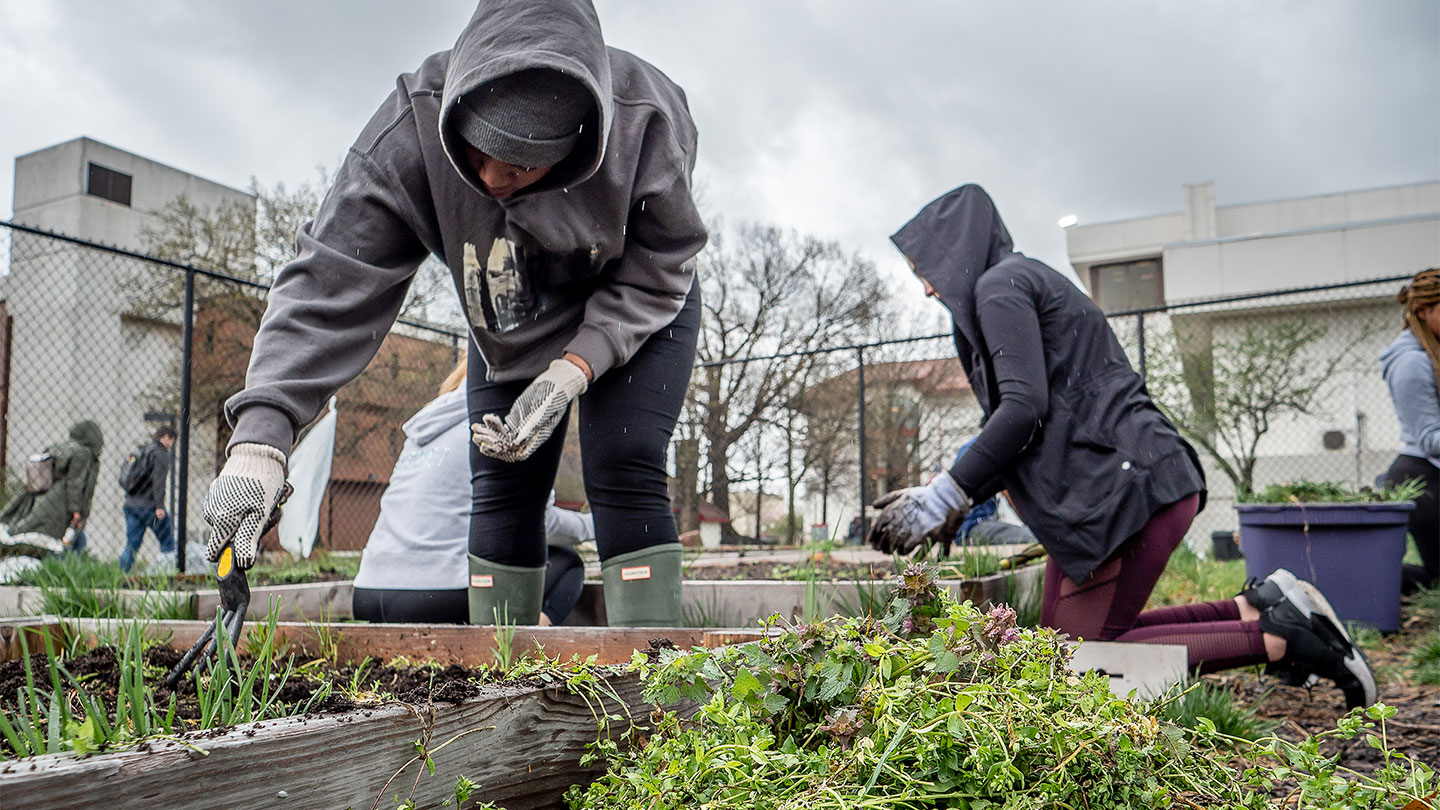 Students prepare the Campus Community Garden for the summer growing season.