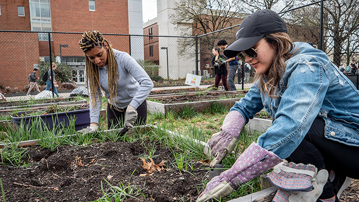 Students tend the Campus Community Garden to donate vegetables