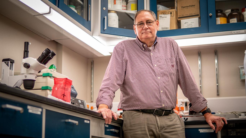 John Gaynor studies sea nettles and clinging jellyfish