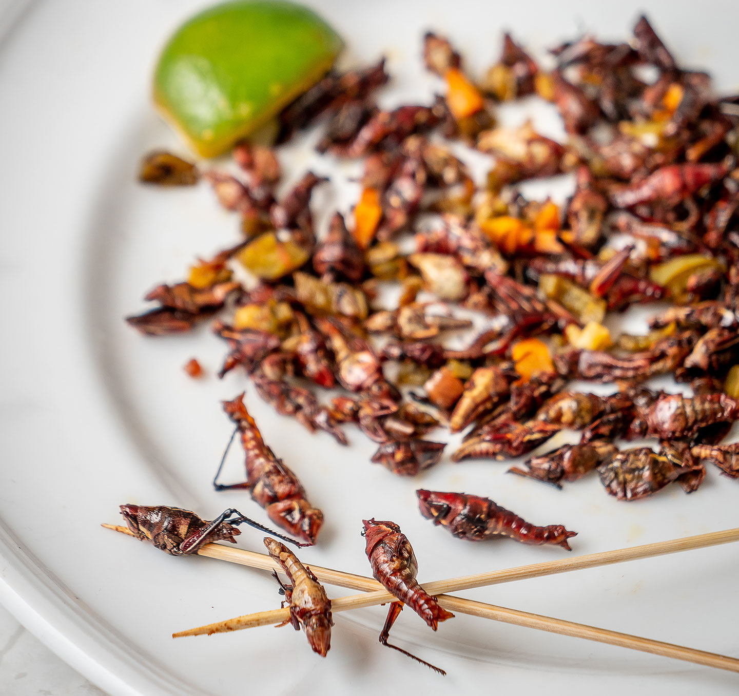This plate of grasshoppers (chapulines) is from Tolache, a Mexican restaurant in New York City.