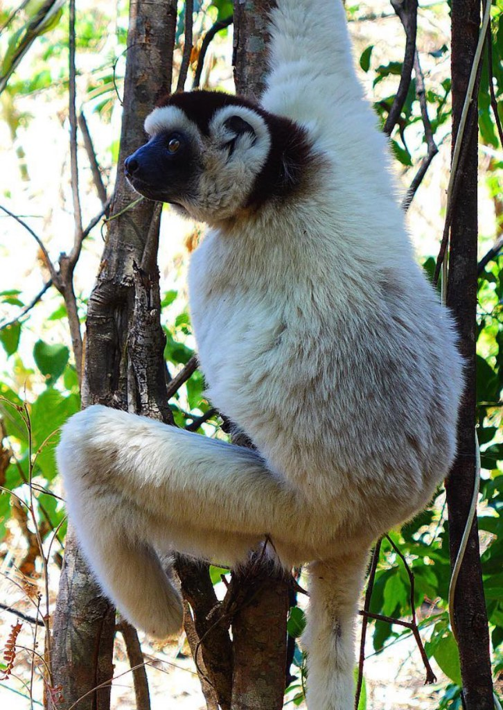 Borgerson's team is using insects to increase food security and save endangered lemurs.