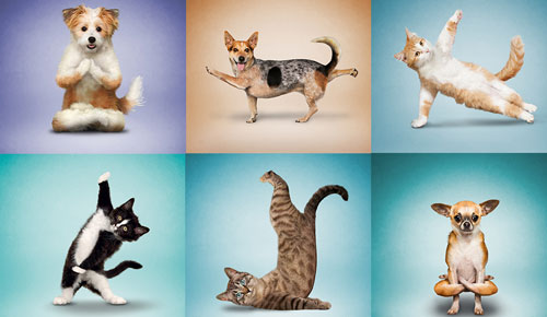 Graphic of dogs and cats in various yoga positions.