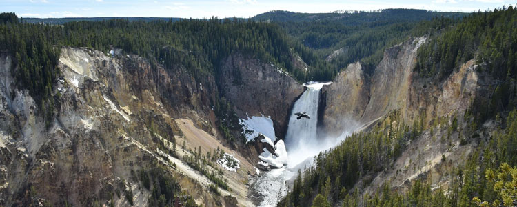 A waterfall in Yellowstone National Park.
