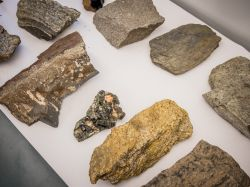 Photo of assorted rock samples
