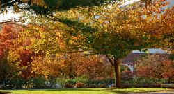 Photo of campus folliage in fall.
