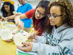 Image of four students examing bone replicas in an anthropology lab.