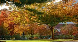 Photo of campus folliage in the fall.
