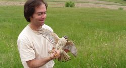 Dr. John Smallwood with an American Kestrel