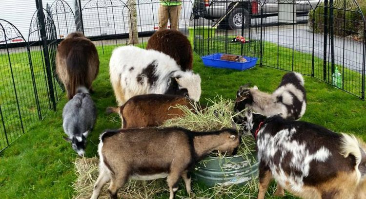 welcome to kansas petting zoo university calendar montclair