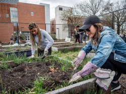 Photo of student working in the campus community garden.
