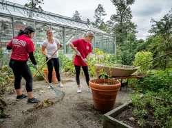 Group of three students doing volunteer gardening work on the National Day of Service