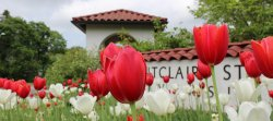 Photo of Montclair State entrance with red tulips