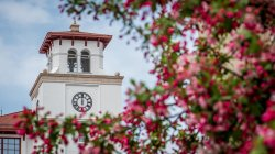 photo of University Hall bell tower in background with pink flowering tree blurred in the foreground