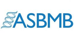 Feature image for The ASBMB Student Chapters welcome Quinn Vega as its new chairman
