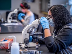 student using microscope in molecular biology lab