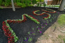 Garden with flowers spelling MSU