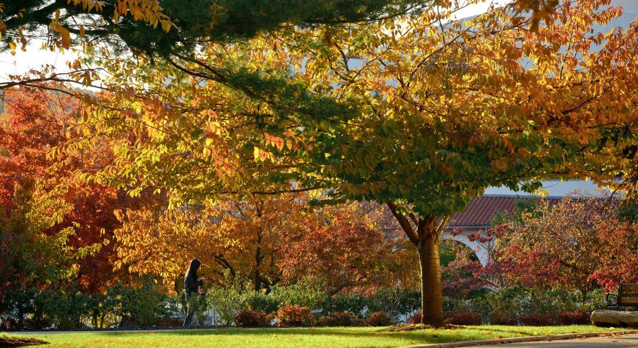 Montclair state university admission essay
