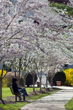 Photo of benches on campus in spring.