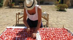 Woman in Sicily spreading the tomato pulp onto boards to begin drying in the sun.