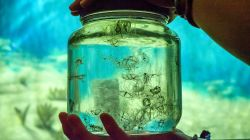 jellyfish in jar