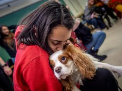 Student hugging therapy dog