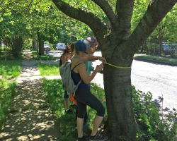 students measuring trees in montclair