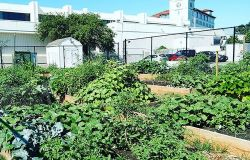 community garden flourishing