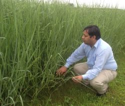 Pankaj Lal observing ethanol crop
