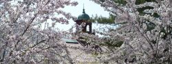 Photo of Bell Tower in Spring
