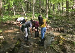 Students explore during the water ecology class