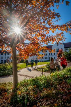 Campus scene including fall foliage, groups of students walking, and the sun shining behind a tree.