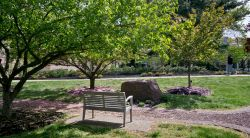 Photo of a bench and tree scene on campus in spring with flower blossoms on the ground.