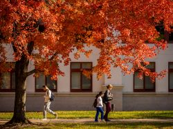 Students walking near the quad in the fall with a tree in full fall bloom.