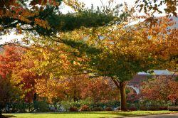 Campus in the fall with multicolored leaves and landscaping by Kasser Theater.