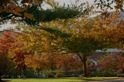 Campus in the fall by Kasser Theater with multi-colored trees and landscaping.