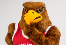 Rocky the Red Hawk thinking about something with his hand on his beak.