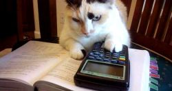Black and white cat using a calculator studying with a book open