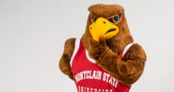 Rocky the Red Hawk thinking to himself.