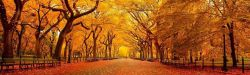 Picture of a orange and gold scene of fall trees and park pathway.