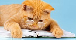 A cat with glasses reading a book.