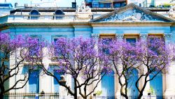Building in Buenos Aires, Argentina, behind trees with purple flowers.