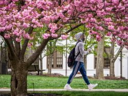 Photo of student walking along campus in front of flowering tree.