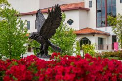 Photo of Red Hawk Statue.